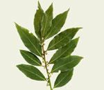 Подушечка из лекарственных растений